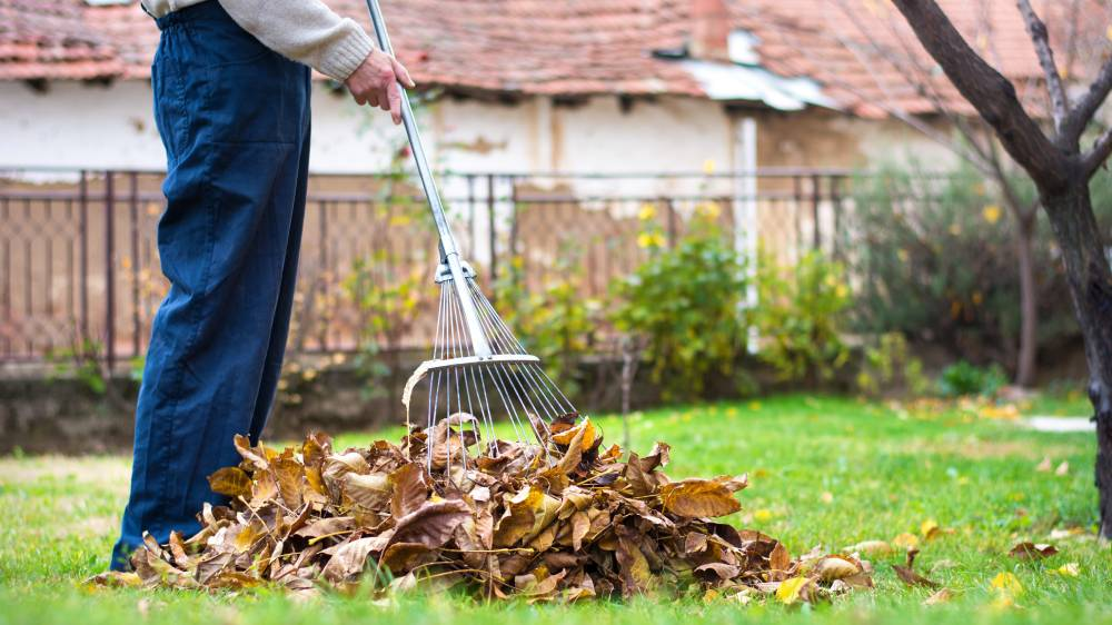 A man is raking leaves in a yard